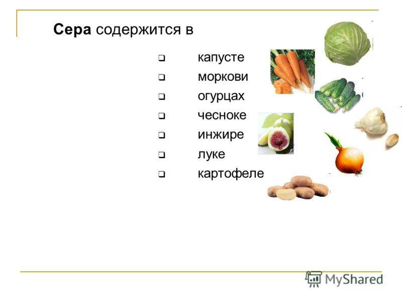 капусте моркови огурцах чесноке инжире луке картофеле Сера содержится в