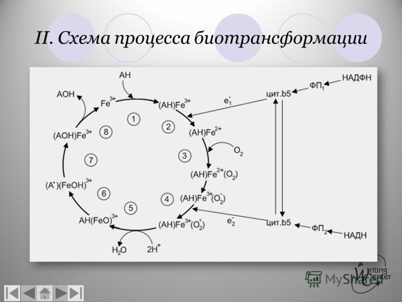 II. Схема процесса биотрансформации