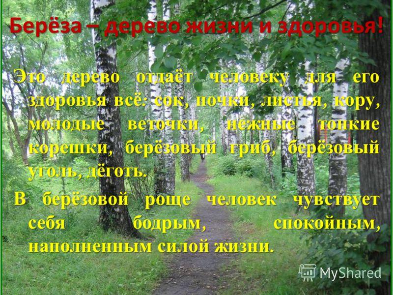 Берёза – дерево жизни и здоровья! Это дерево отдаёт человеку для его здоровья всё : сок, почки, листья, кору, молодые веточки, нежные тонкие корешки, берёзовый гриб, берёзовый уголь, дёготь. В берёзовой роще человек чувствует себя бодрым, спокойным,