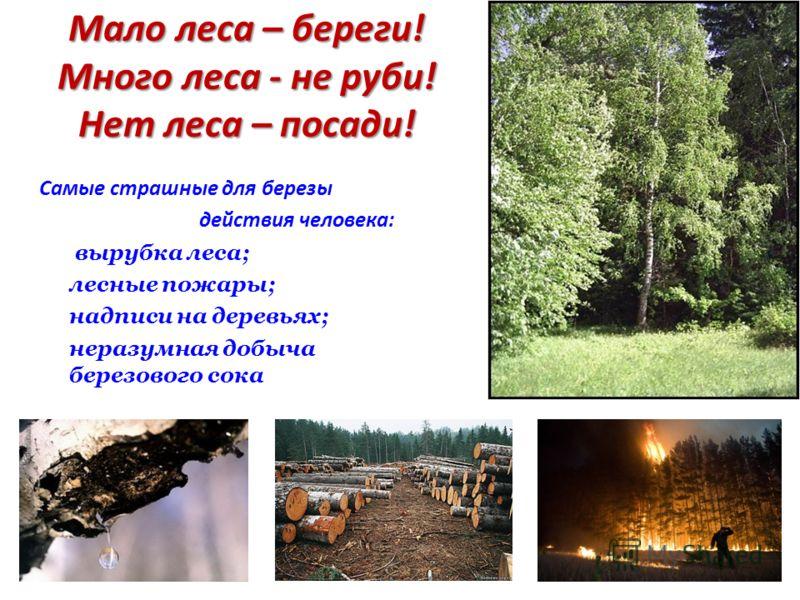 Мало леса – береги! Много леса - не руби! Нет леса – посади! Самые страшные для березы действия человека: вырубка леса; лесные пожары; надписи на деревьях; неразумная добыча березового сока