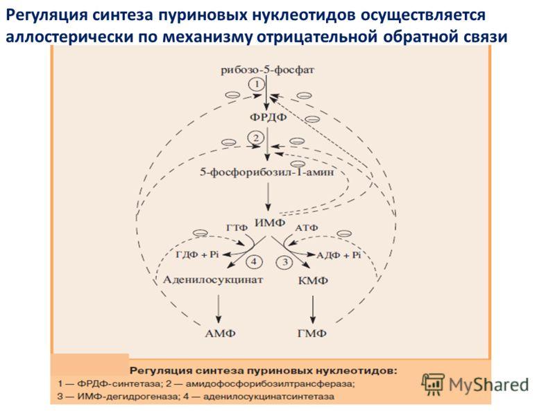 Регуляция синтеза пуриновых нуклеотидов осуществляется аллостерически по механизму отрицательной обратной связи