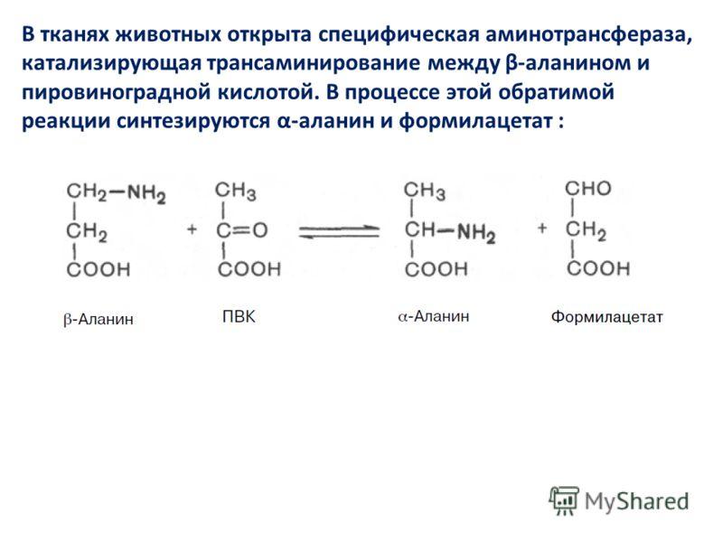 В тканях животных открыта специфическая аминотрансфераза, катализирующая трансаминирование между β-аланином и пировиноградной кислотой. В процессе этой обратимой реакции синтезируются α-аланин и формилацетат :