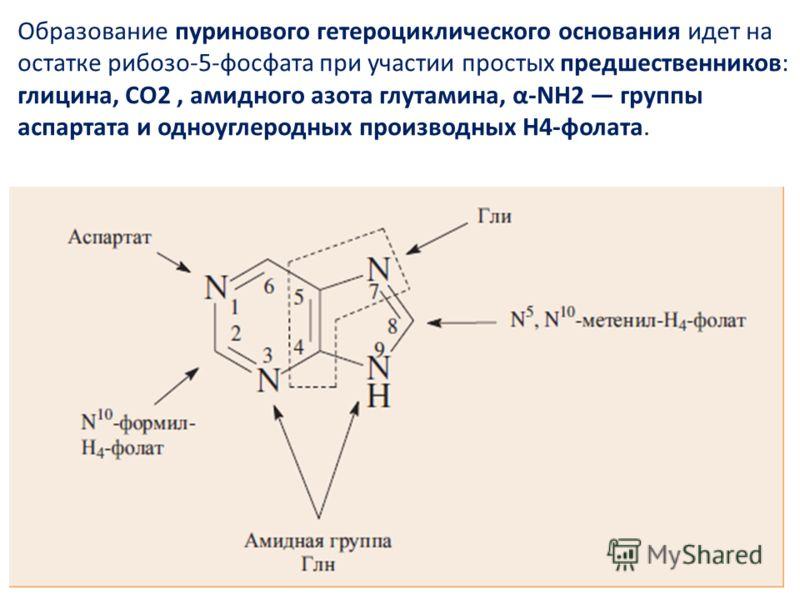 Образование пуринового гетероциклического основания идет на остатке рибозо-5-фосфата при участии простых предшественников: глицина, СО2, амидного азота глутамина, α-NH2 группы аспартата и одноуглеродных производных Н4-фолата.