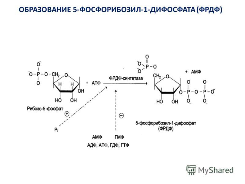 ОБРАЗОВАНИЕ 5-ФОСФОРИБОЗИЛ-1-ДИФОСФАТА (ФРДФ)