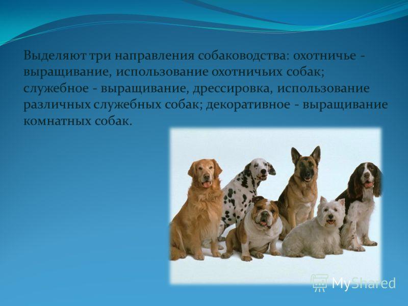 Выделяют три направления собаководства: охотничье - выращивание, использование охотничьих собак; служебное - выращивание, дрессировка, использование различных служебных собак; декоративное - выращивание комнатных собак.