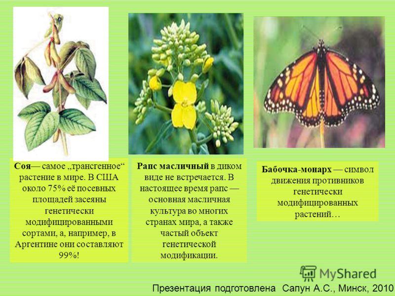 Соя самое трансгенное растение в мире. В США около 75% её посевных площадей засеяны генетически модифицированными сортами, а, например, в Аргентине они составляют 99%! Рапс масличный в диком виде не встречается. В настоящее время рапс основная маслич