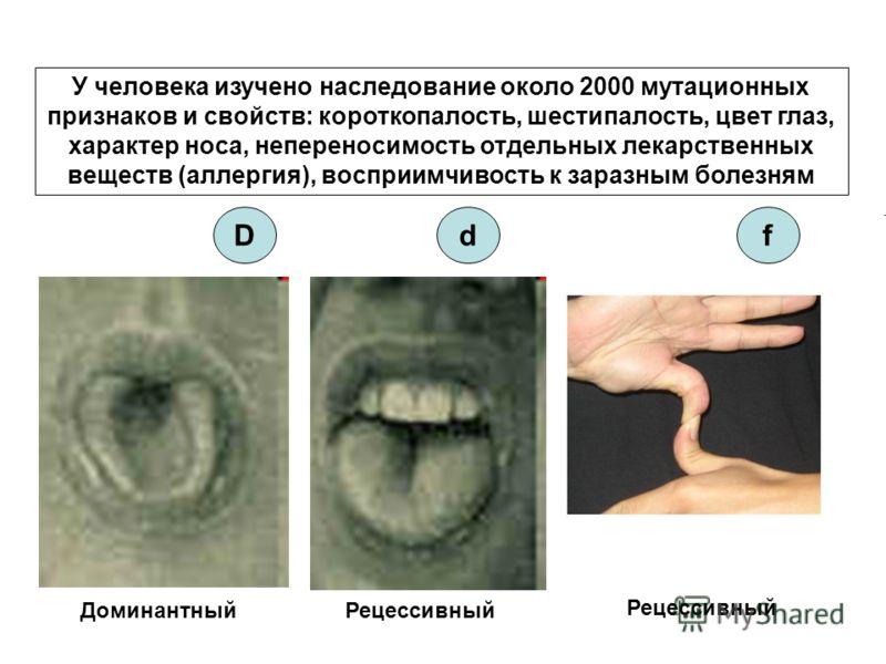 У человека изучено наследование около 2000 мутационных признаков и свойств: короткопалость, шестипалость, цвет глаз, характер носа, непереносимость отдельных лекарственных веществ (аллергия), восприимчивость к заразным болезням ДоминантныйРецессивный