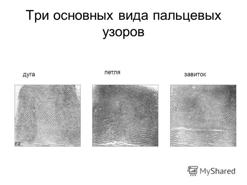 Три основных вида пальцевых узоров дуга петля завиток