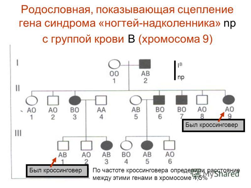 Родословная, показывающая сцепление гена синдрома «ногтей-надколенника» np с группой крови В (хромосома 9) Был кроссинговер По частоте кроссинговера определили расстояние между этими генами в хромосоме 1,5% I В np