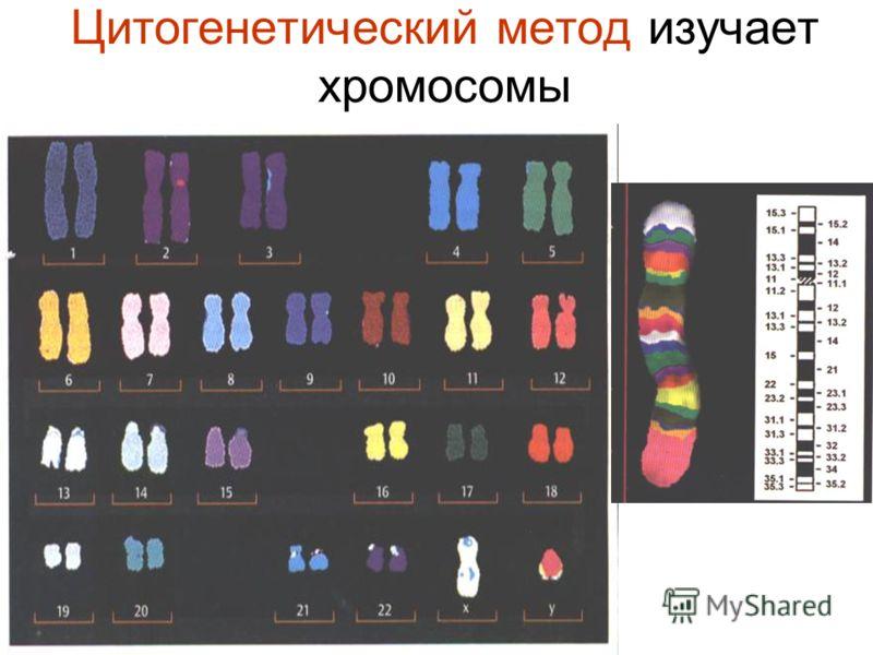 Цитогенетика фото