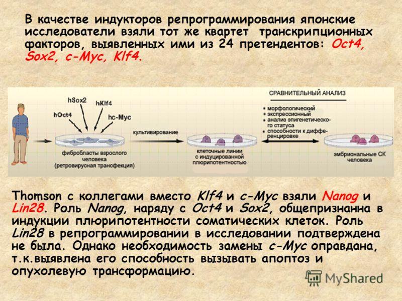 В качестве индукторов репрограммирования японские исследователи взяли тот же квартет транскрипционных факторов, выявленных ими из 24 претендентов: Oct4, Sox2, c-Myc, Klf4. Thomson с коллегами вместо Klf4 и c-Myc взяли Nanog и Lin28. Роль Nanog, наряд