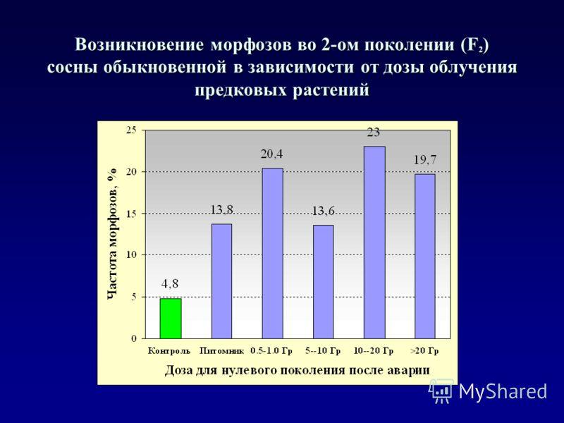 Возникновение морфозов во 2-ом поколении (F 2 ) сосны обыкновенной в зависимости от дозы облучения предковых растений