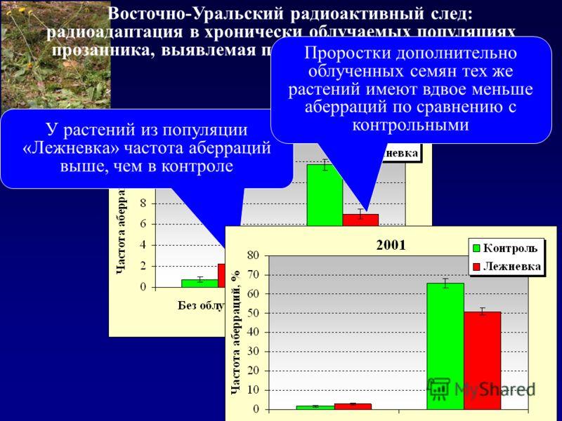 Восточно-Уральский радиоактивный след: радиоадаптация в хронически облучаемых популяциях прозанника, выявлемая при дополнительном облучении У растений из популяции «Лежневка» частота аберраций выше, чем в контроле Проростки дополнительно облученных с