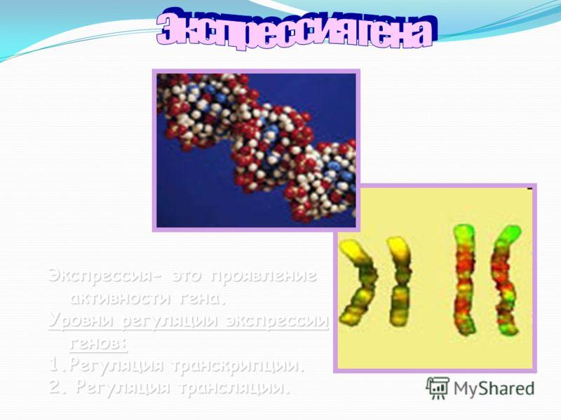 Экспрессия- это проявление активности гена. Уровни регуляции экспрессии генов: 1.Регуляция транскрипции. 2. Регуляция трансляции.
