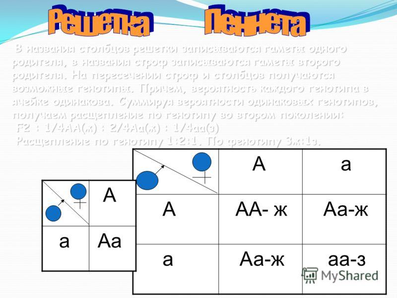 А а А АА- ж Аа-ж а аа-з В названия столбцов решетки записываются гаметы одного родителя, в названия строф записываются гаметы второго родителя. На пересечении строф и столбцов получаются возможные генотипы. Причем, вероятность каждого генотипа в ячей