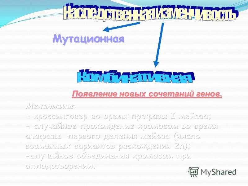 Механизмы: - кроссинговер во время профазы I мейоза; - случайное прохождение хромосом во время анафазы первого деления мейоза (число возможных вариантов расхождения 2n); -случайное объединения хромосом при оплодотворении. Появление новых сочетаний ге