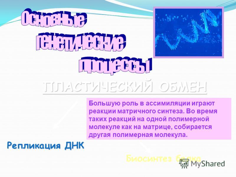 Репликация ДНК Биосинтез белка ПЛАСТИЧЕСКИЙ ОБМЕН Большую роль в ассимиляции играют реакции матричного синтеза. Во время таких реакций на одной полимерной молекуле как на матрице, собирается другая полимерная молекула.