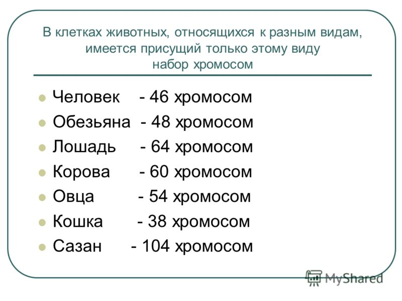 http://images.myshared.ru/364113/slide_5.jpg