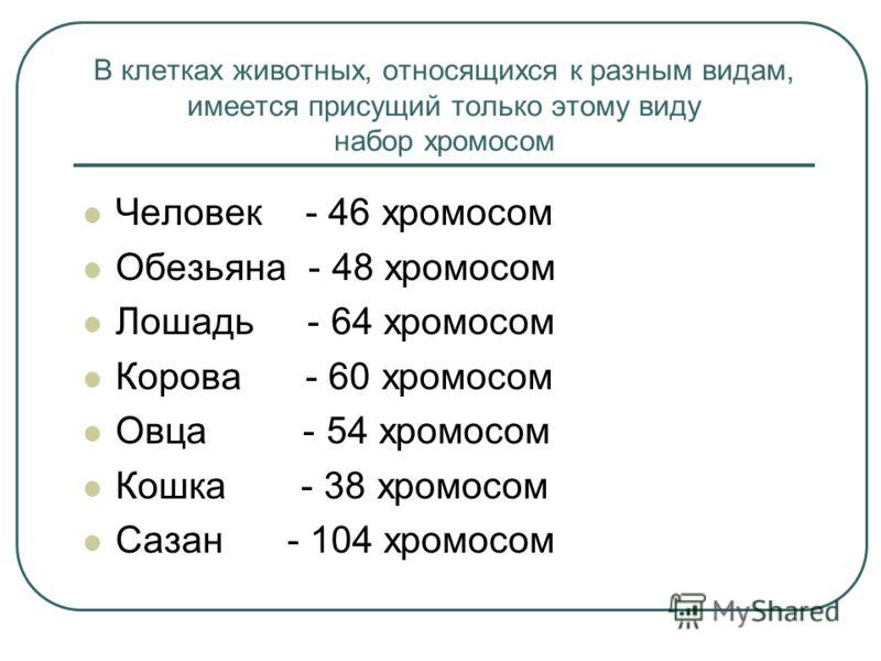 В клетках животных, относящихся к разным видам, имеется присущий только этому виду набор хромосом Человек - 46 хромосом Обезьяна - 48 хромосом Лошадь - 64 хромосом Корова - 60 хромосом Овца - 54 хромосом Кошка - 38 хромосом Сазан - 104 хромосом