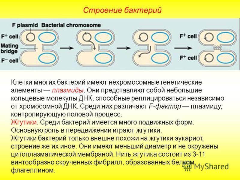 Строение бактерий Клетки многих бактерий имеют нехромосомные генетические элементы плазмиды. Они представляют собой небольшие кольцевые молекулы ДНК, способные реплицироваться независимо от хромосомной ДНК. Среди них различают F-фактор плазмиду, конт