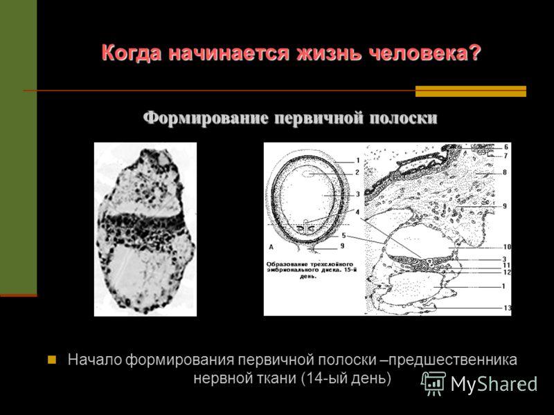 8 Когда начинается жизнь человека? Начало формирования первичной полоски –предшественника нервной ткани (14-ый день) Формирование первичной полоски