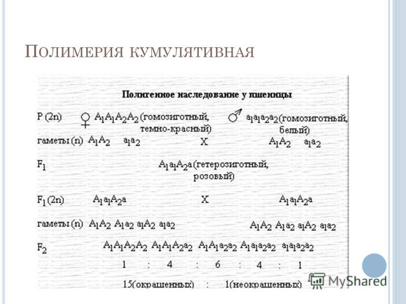 П ОЛИМЕРИЯ КУМУЛЯТИВНАЯ