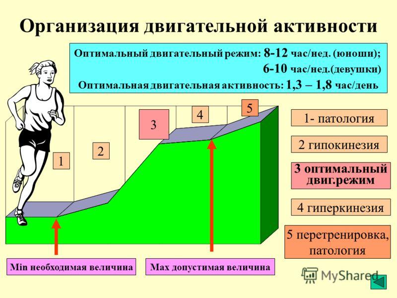 Организация двигательной активности 1