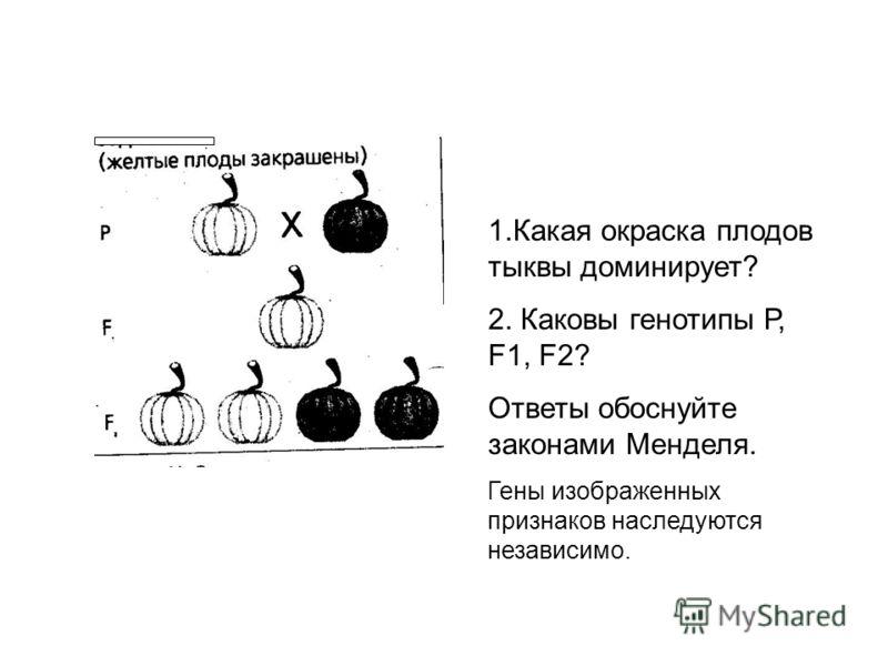 1.Какая окраска плодов тыквы доминирует? 2. Каковы генотипы Р, F1, F2? Ответы обоснуйте законами Менделя. Гены изображенных признаков наследуются независимо.
