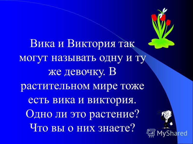 Название какой страны на русский язык переводится «птичий хвост»