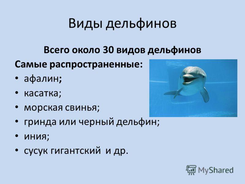Виды дельфинов Всего около 30 видов дельфинов Самые распространенные: афалин; касатка; морская свинья; гринда или черный дельфин; иния; сусук гигантский и др.