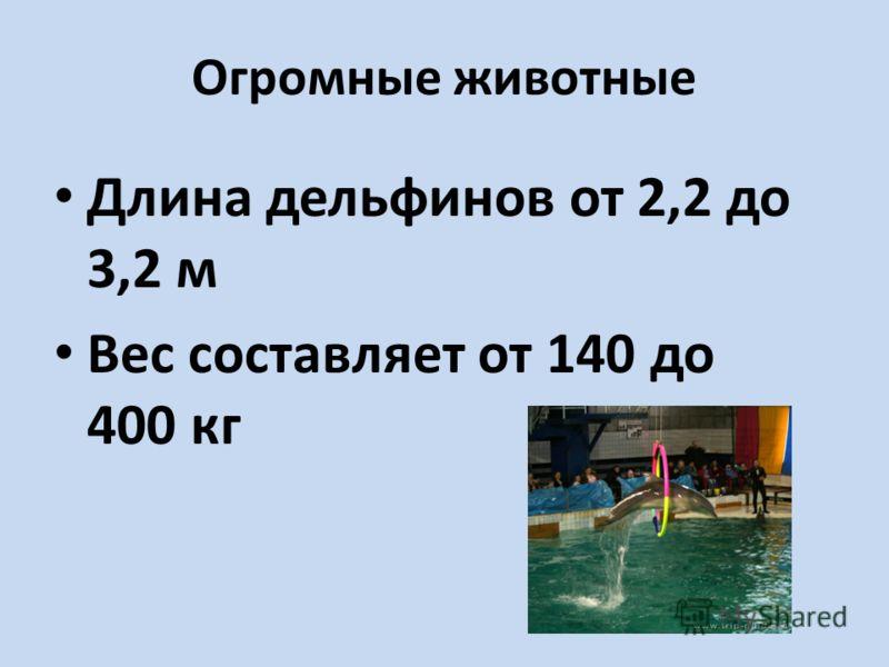 Огромные животные Длина дельфинов от 2,2 до 3,2 м Вес составляет от 140 до 400 кг