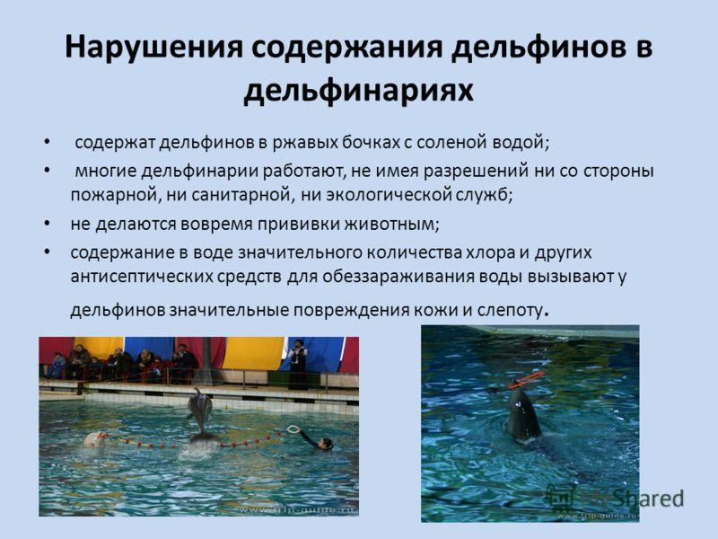 Нарушения содержания дельфинов в дельфинариях содержат дельфинов в ржавых бочках с соленой водой; многие дельфинарии работают, не имея разрешений ни со стороны пожарной, ни санитарной, ни экологической служб; не делаются вовремя прививки животным; со