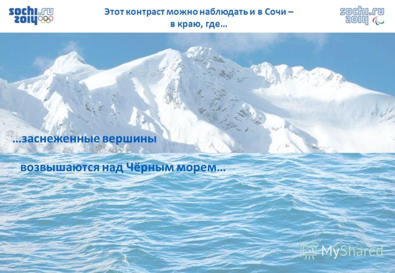 Этот контраст можно наблюдать и в Сочи – в краю, где… …заснеженные вершины возвышаются над Чёрным морем…