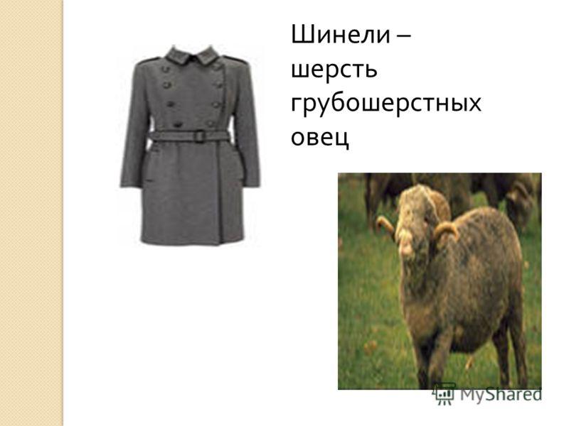 Шинели – шерсть грубошерстных овец