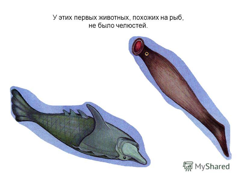 У этих первых животных, похожих на рыб, не было челюстей.