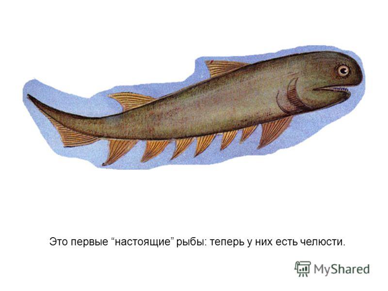 Это первые настоящие рыбы: теперь у них есть челюсти.