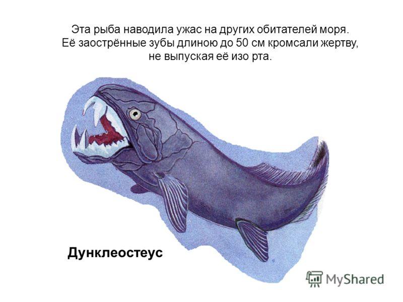 Эта рыба наводила ужас на других обитателей моря. Её заострённые зубы длиною до 50 см кромсали жертву, не выпуская её изо рта. Дунклеостеус