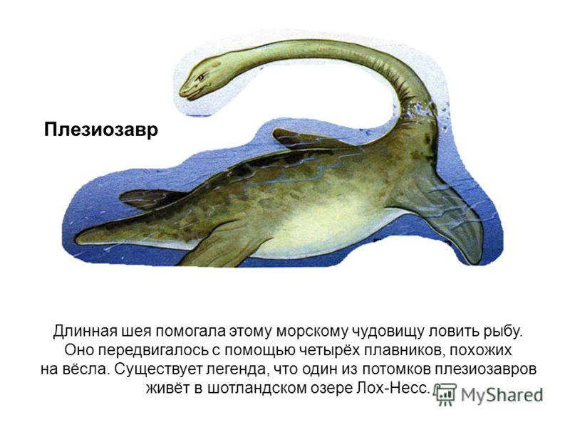 Длинная шея помогала этому морскому чудовищу ловить рыбу. Оно передвигалось с помощью четырёх плавников, похожих на вёсла. Существует легенда, что один из потомков плезиозавров живёт в шотландском озере Лох-Несс. Плезиозавр
