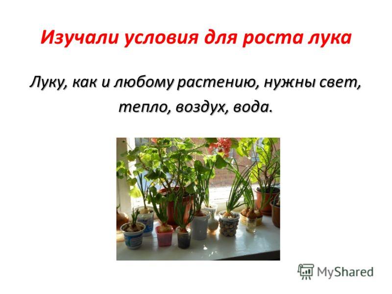 Изучали условия для роста лука Луку, как и любому растению, нужны свет, тепло, воздух, вода.