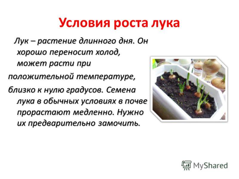 Условия роста лука Лук – растение длинного дня. Он хорошо переносит холод, может расти при Лук – растение длинного дня. Он хорошо переносит холод, может расти при положительной температуре, близко к нулю градусов. Семена лука в обычных условиях в поч