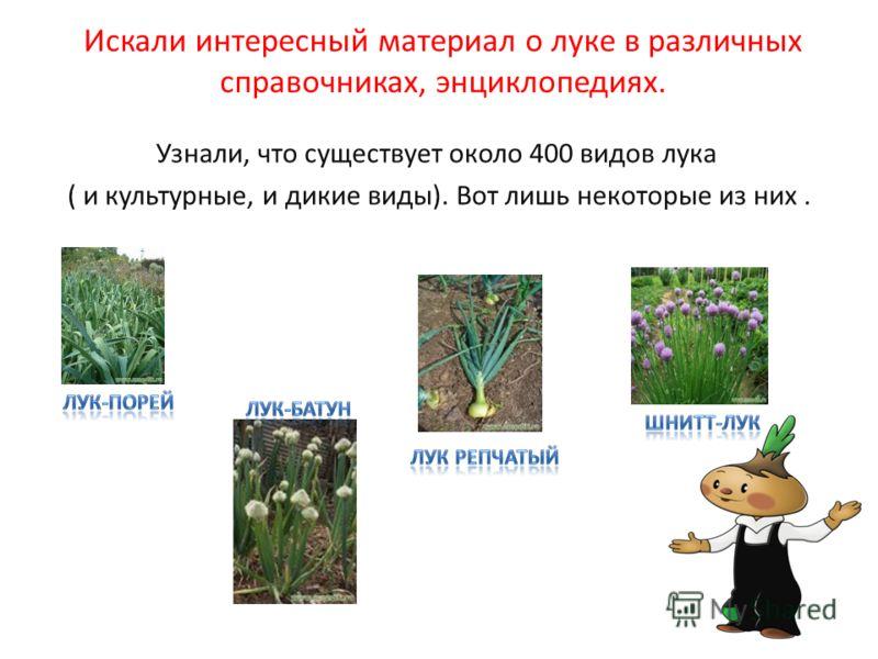 Искали интересный материал о луке в различных справочниках, энциклопедиях. Узнали, что существует около 400 видов лука ( и культурные, и дикие виды). Вот лишь некоторые из них.