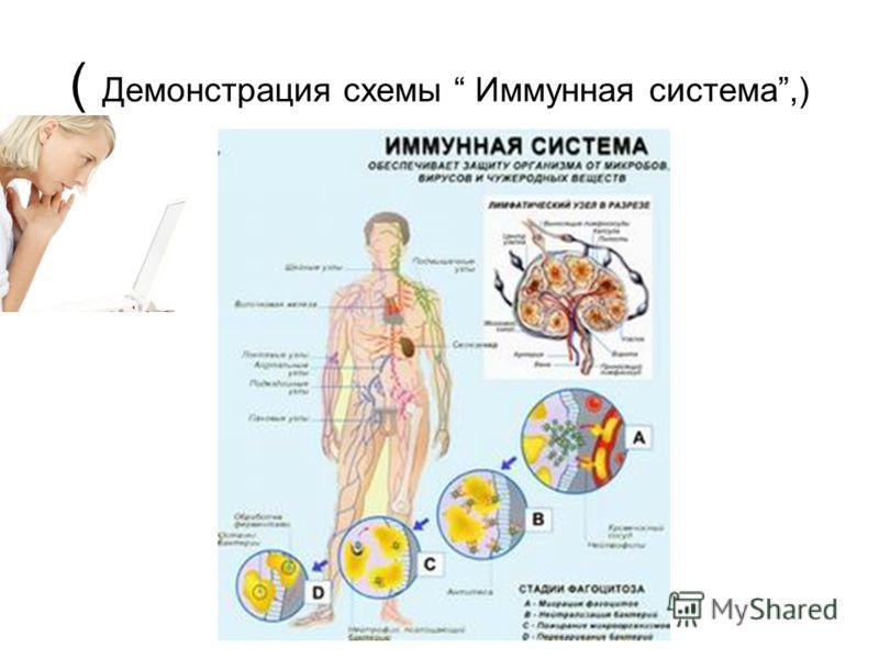 ( Демонстрация схемы Иммунная система,)