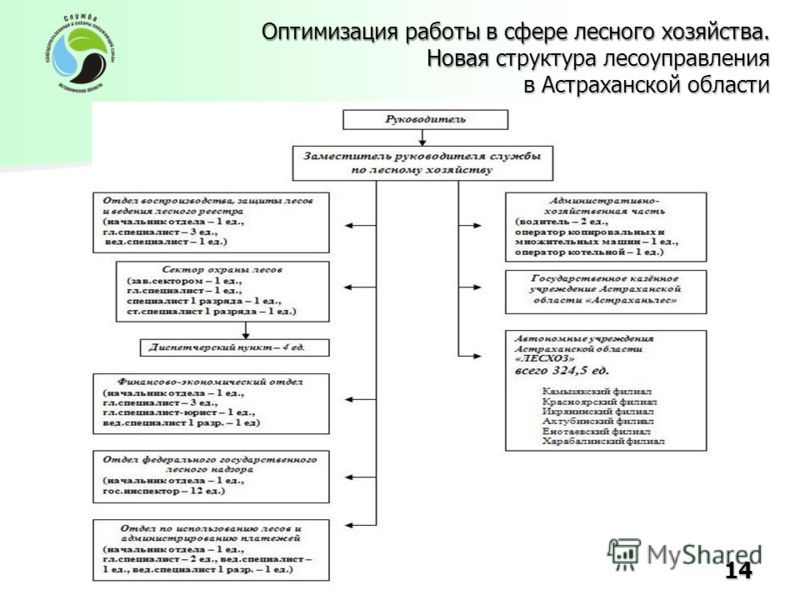 Оптимизация работы в сфере лесного хозяйства. Новая структура лесоуправления в Астраханской области 14