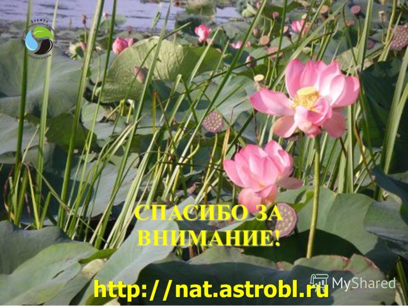 36 СПАСИБО ЗА ВНИМАНИЕ! http://nat.astrobl.ru http://nat.astrobl.ru