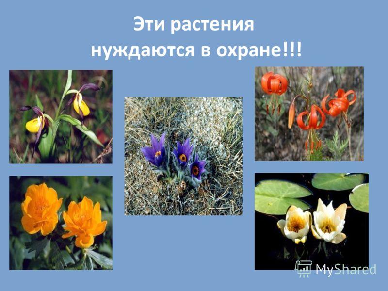 Эти растения нуждаются в охране!!!