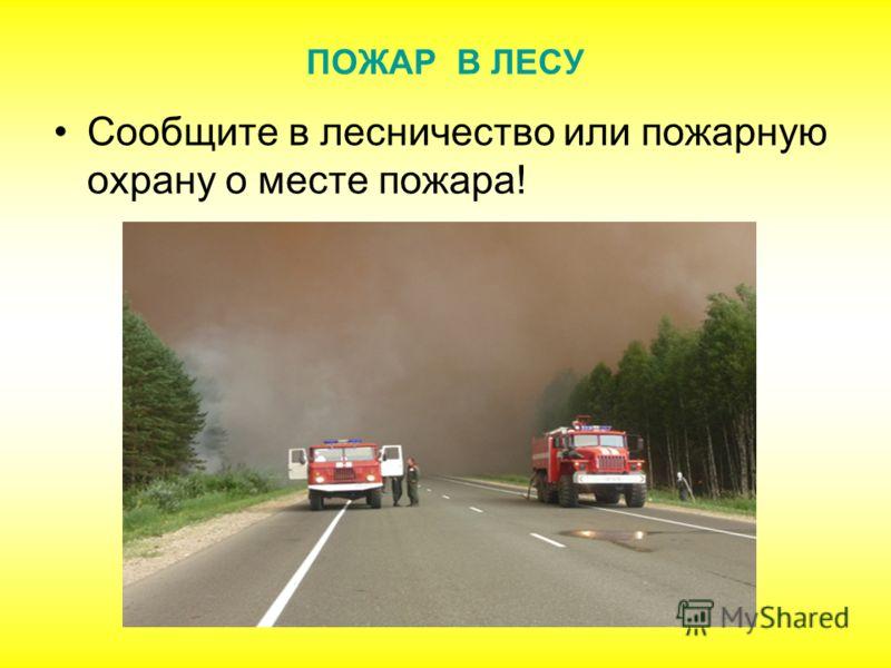 ПОЖАР В ЛЕСУ Сообщите в лесничество или пожарную охрану о месте пожара!
