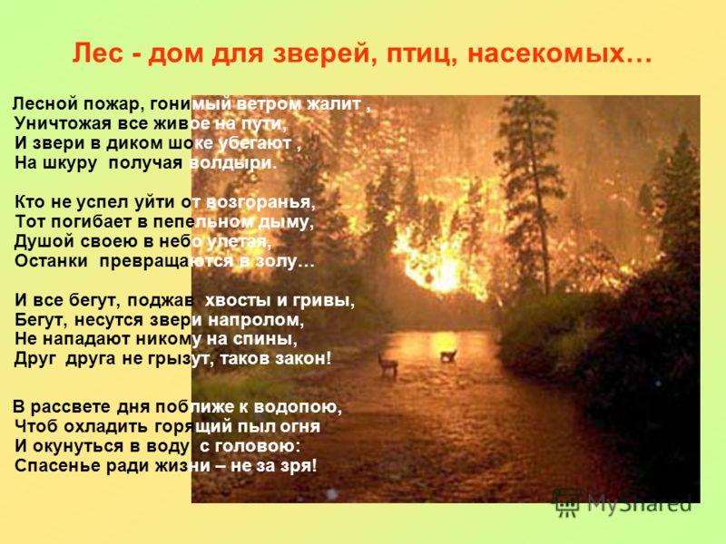 Лес - дом для зверей, птиц, насекомых… Лесной пожар, гонимый ветром жалит, Уничтожая все живое на пути, И звери в диком шоке убегают, На шкуру получая волдыри. Кто не успел уйти от возгоранья, Тот погибает в пепельном дыму, Душой своею в небо улетая,