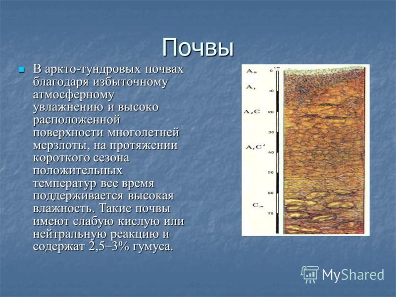 Почвы В аркто-тундровых почвах благодаря избыточному атмосферному увлажнению и высоко расположенной поверхности многолетней мерзлоты, на протяжении короткого сезона положительных температур все время поддерживается высокая влажность. Такие почвы имею