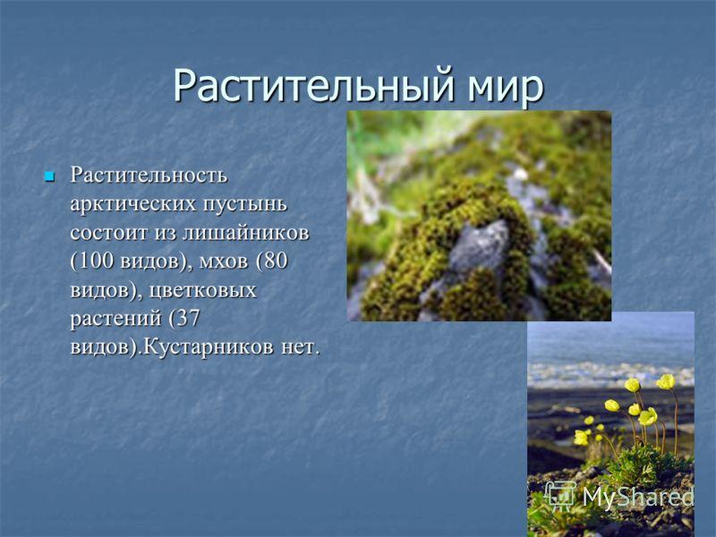Растительный мир Растительность арктических пустынь состоит из лишайников (100 видов), мхов (80 видов), цветковых растений (37 видов).Кустарников нет.