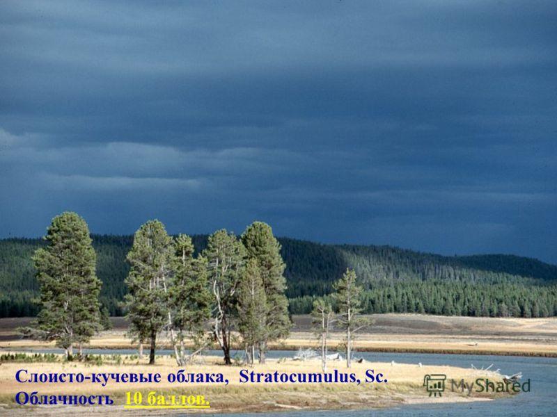Слоисто-кучевые облака, Stratocumulus, Sc. Облачность 10 баллов.10 баллов.